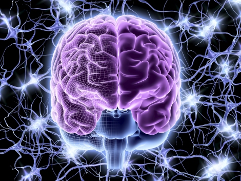 Brain and nerve cells, neural network