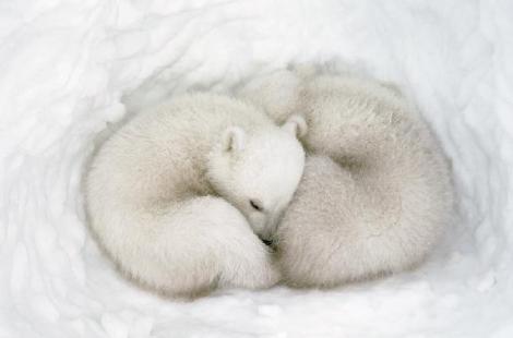 urso-hibernando