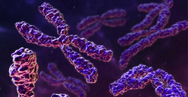 O DNA é empacotado em pacotes chamados cromossomos