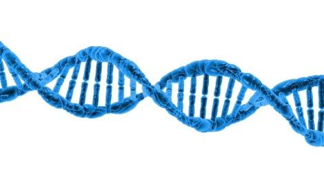 O DNA pode se mover de uma espécie para outra