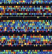 Mesmo o genoma humano contém DNA de outras espécies