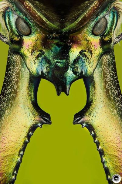 insectoid14
