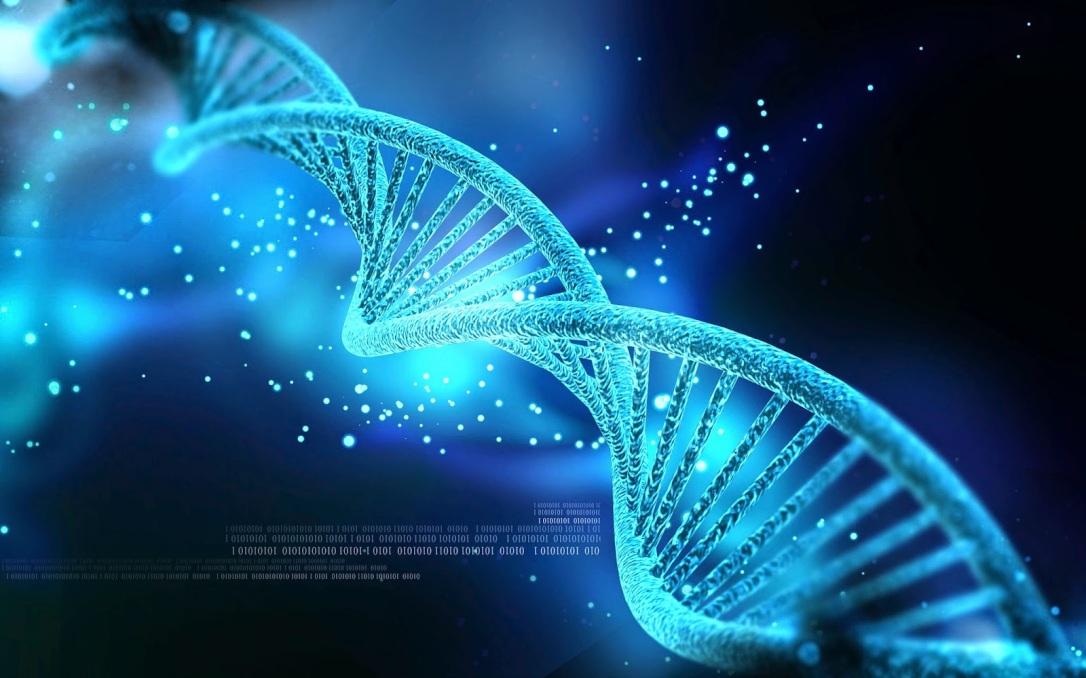 Seu DNA controla como seu corpo se desenvolve